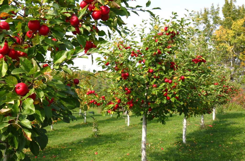 Early spring has orchard growers bracing