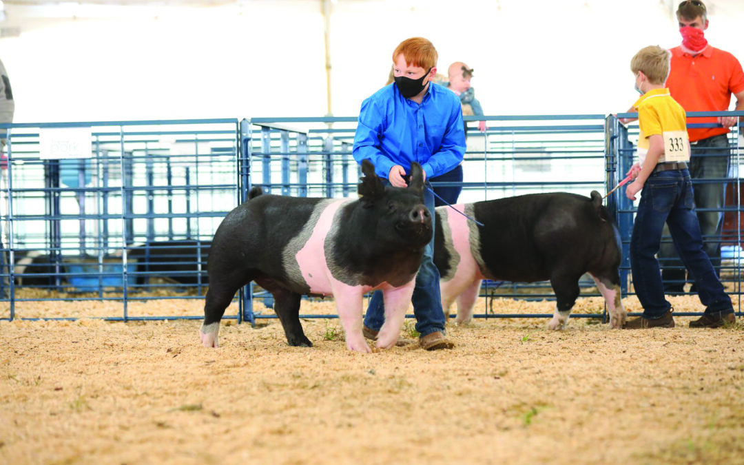 Va. youth dairy, livestock shows hailed as a success