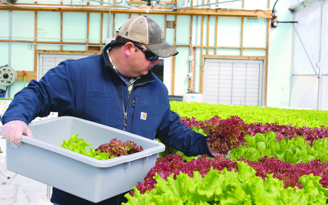 Lettuce offers Sturgis space to grow