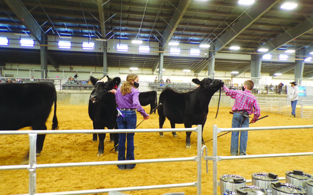 Quality of March Moo Madness Youth Livestock Show entries impresses judge