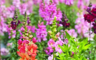 Va. flower farm grows through retail sales