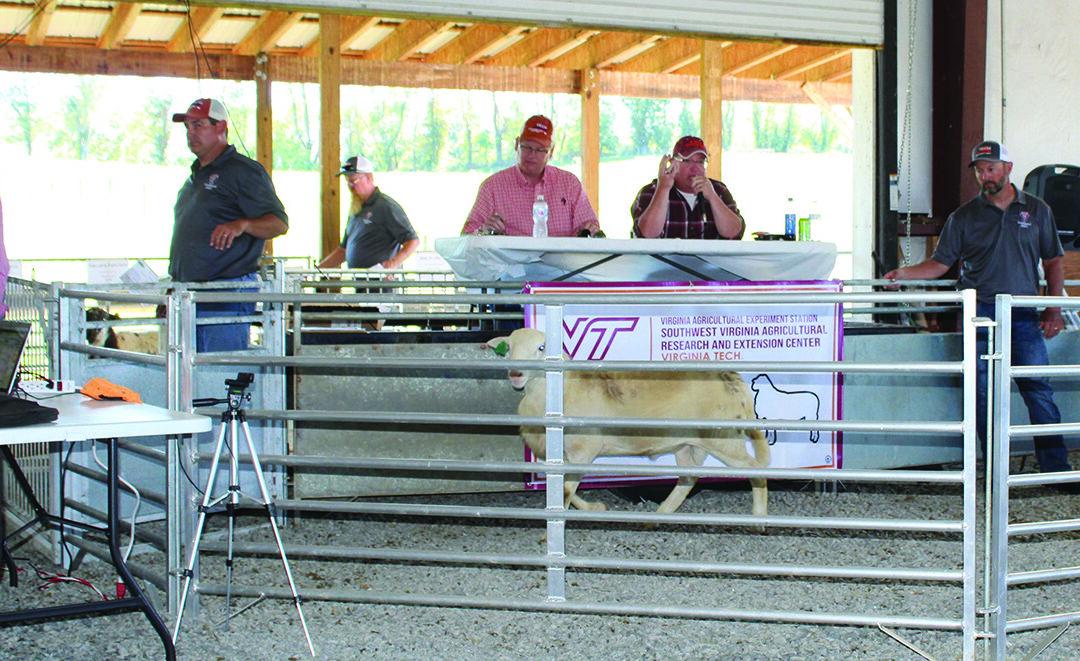 Annual ram-forage sale deemed a success